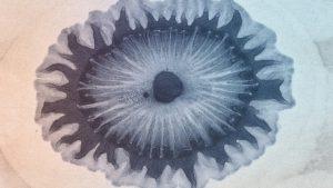Color Plate, Der Bildungstrieb der Stoffe 1855, Runge, F. F. - Remixed by AE